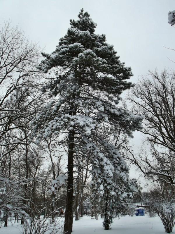 winter012