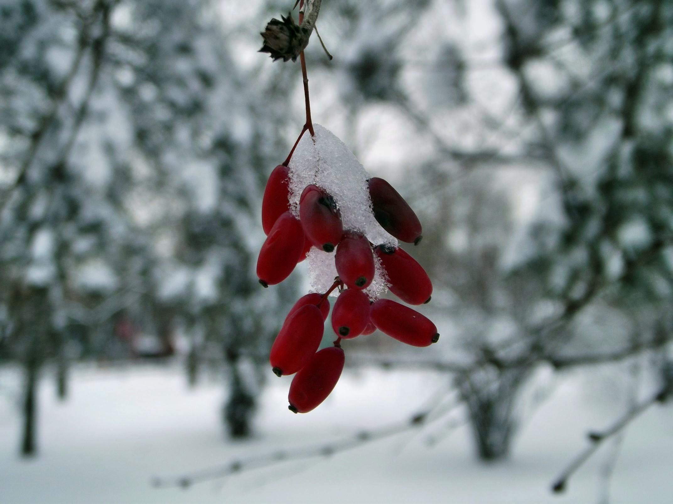winter017