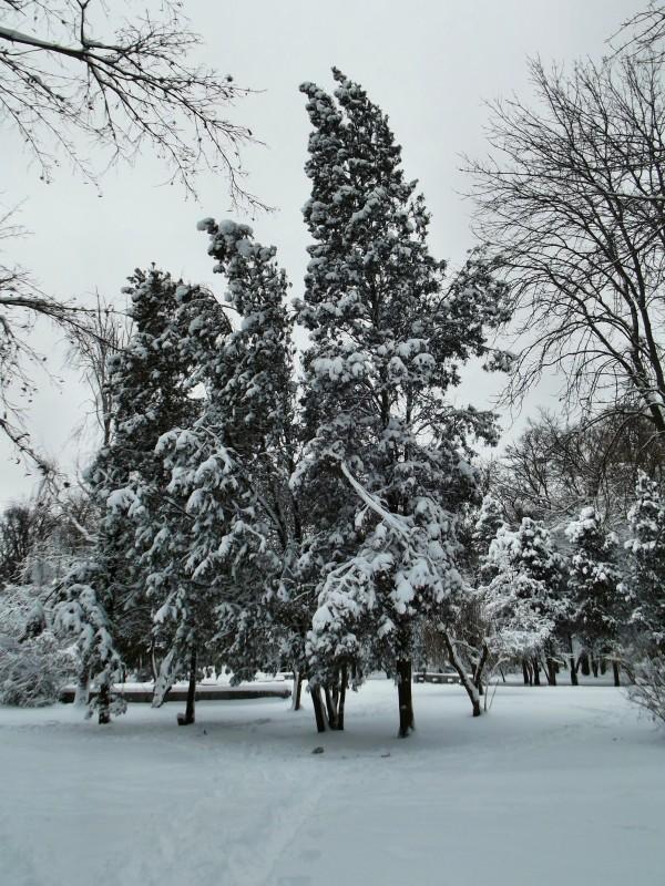 winter032