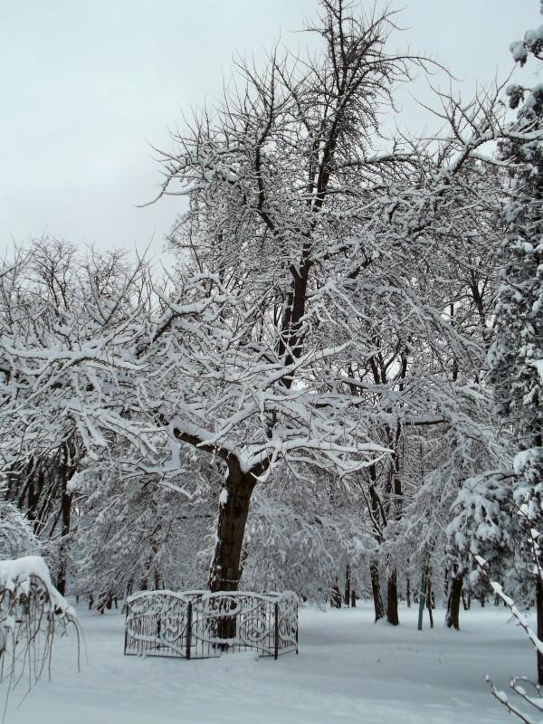 winter046