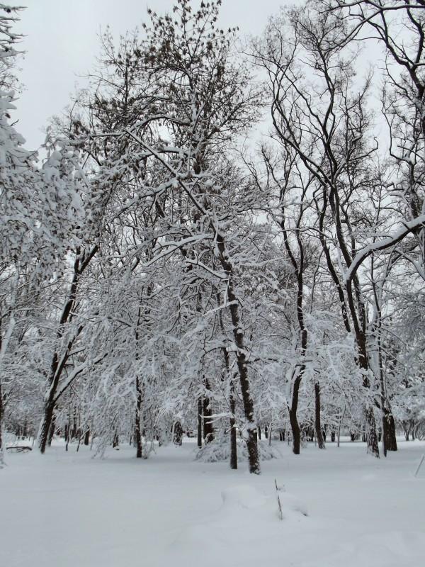winter062