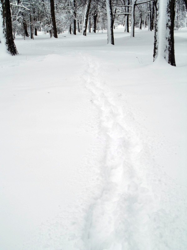winter068