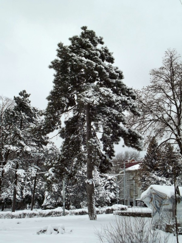 winter099