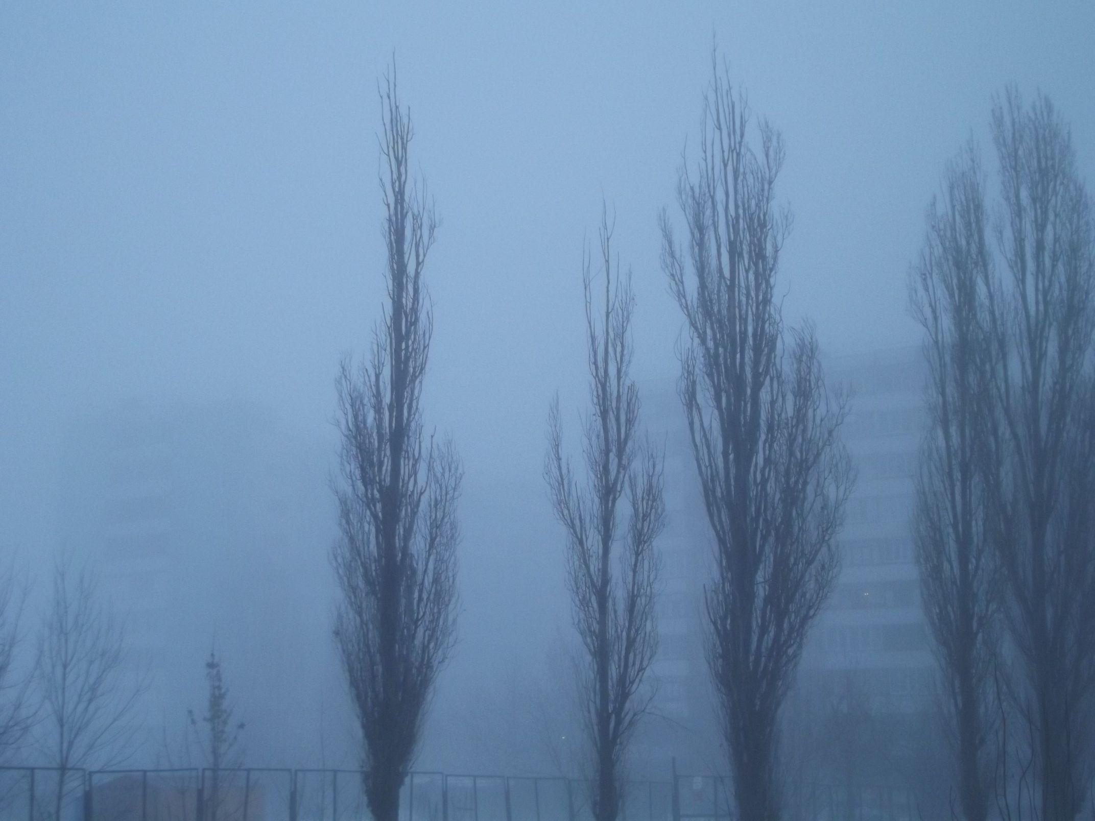 smog018