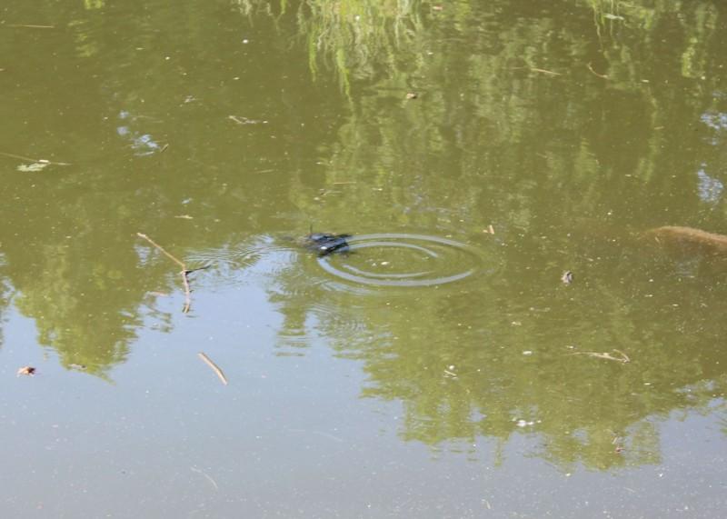 turtles09
