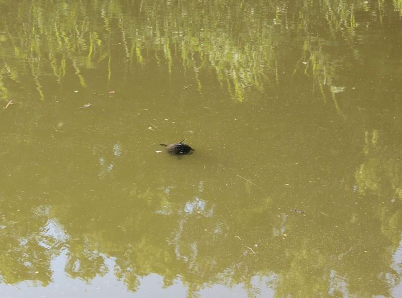 turtles13